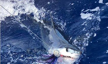 Pesca ao Tubarão